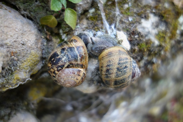 Snail love, turns out that love was in the air that day