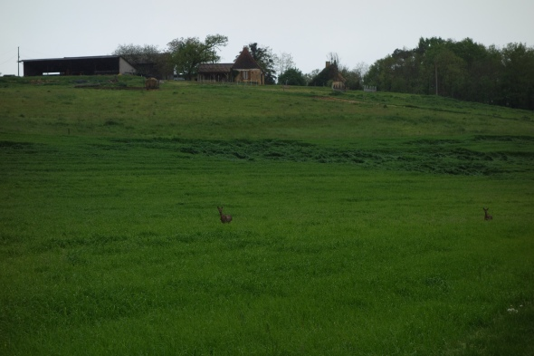 Two deer running straight for us